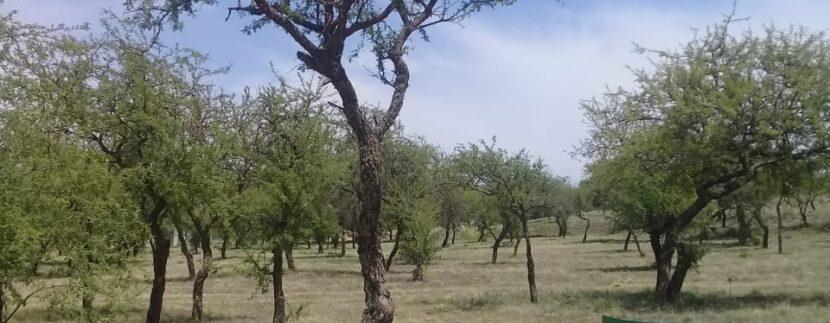 Lote-Alta-Gracia-Country-Golf-10509-m2-venta-5